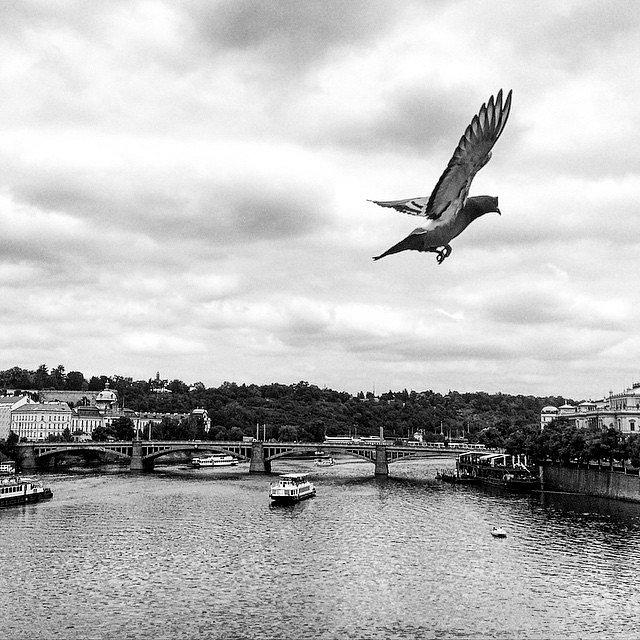 Lets fly!! (Létání) #Europe #RoadTrip #Travel #Photographers #Praga #Checos #LU #LetsExplore #NG #BN