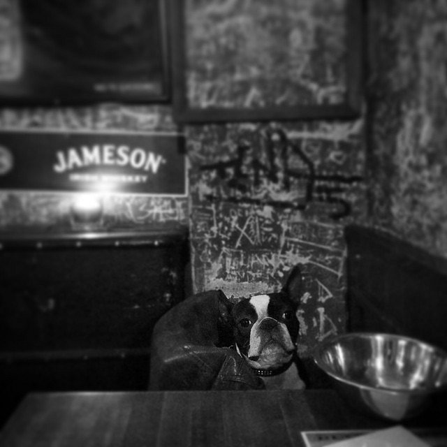 Pet Friendly Bar. #Europe #RoadTrip #Travel #Photographers #Praga #Checos #LU #LetsExplore #NG #BN #Dog #Bar #Night